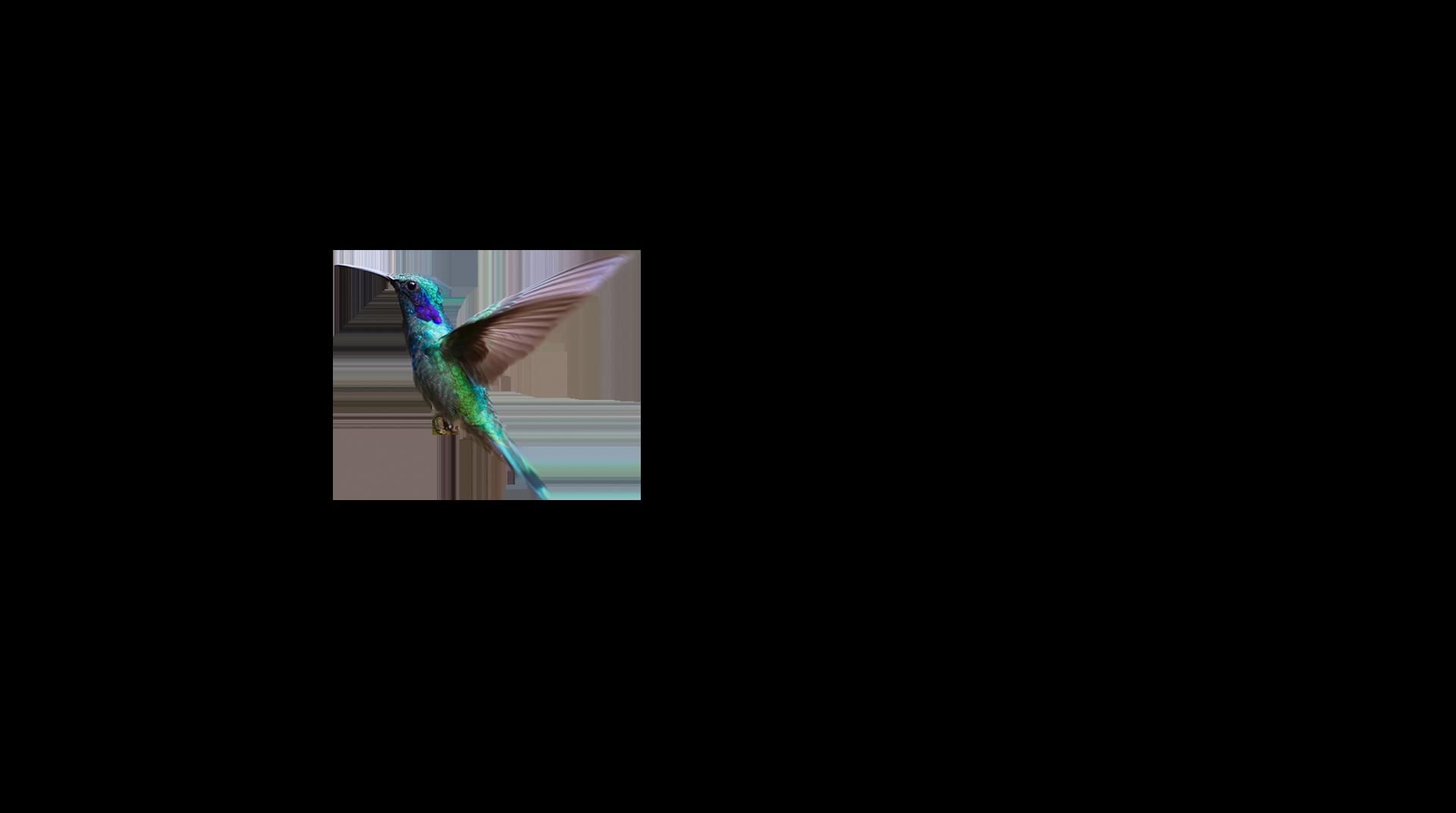 Bird Picutre